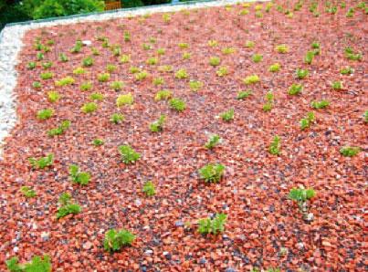 Dachbegrünung für ein gutes Klima